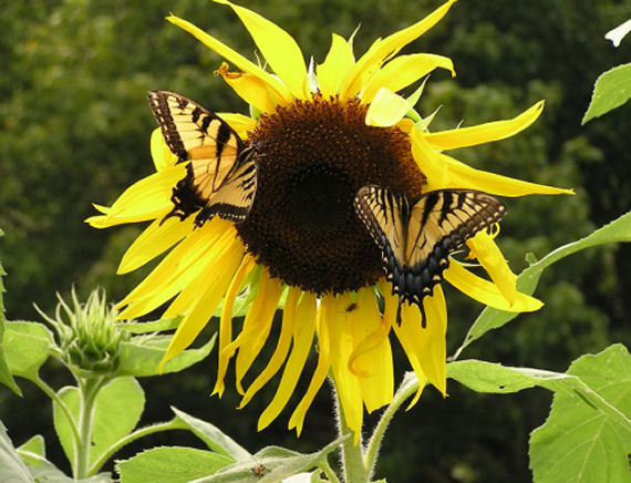 Sunflower Lunch